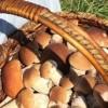Podstawowe zasady bezpiecznego grzybobrania