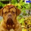 Co to jest ta leptospiroza i dlaczego należy szczepić na nią psy?