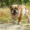 Korzyści oraz problemy związane ze sterylizacją psa