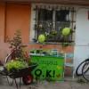 Warsztaty  ogrodnicze, w ramach Książka jest O.K!