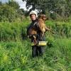 Strażacy pomogli uwięzionemu psu