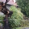 Oszacowano straty w Wielkopolsce po przejściu orkanu Grzegorz