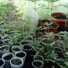 Pilscy Kryminalni zabezpieczyli blisko 5 kg narkotyków