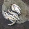 Policjanci zatrzymali rybnych kłusowników