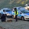 Pilscy policjanci zaopiekowali się potrąconą sarną