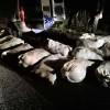 Ukradli 840 kg ryb. Odpowiedzą za kradzież i znęcanie się nad zwierzętami