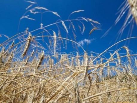 Szkody z powodu negatywnych zjawisk atmosferycznych. Co mogą zrobić rolnicy?