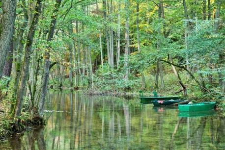 Jak wypoczywać w lesie i się nie nudzić? Podpowiadają pilscy leśnicy