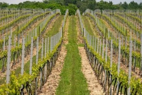 Podróż szlakiem polskich winnic