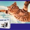 Osteoartroza u kotów