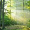 Majówka w lesie z aparatem