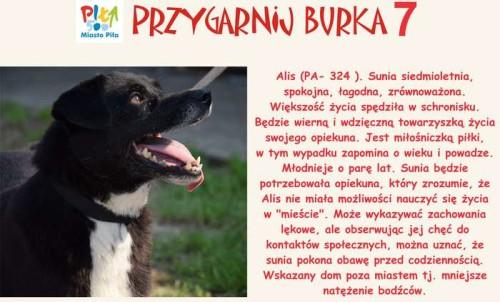 juz_w_sobote_przygarnij_burka01