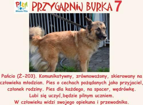 juz_w_sobote_przygarnij_burka04
