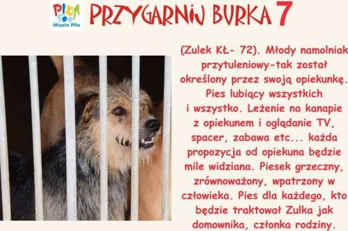 juz_w_sobote_przygarnij_burka06