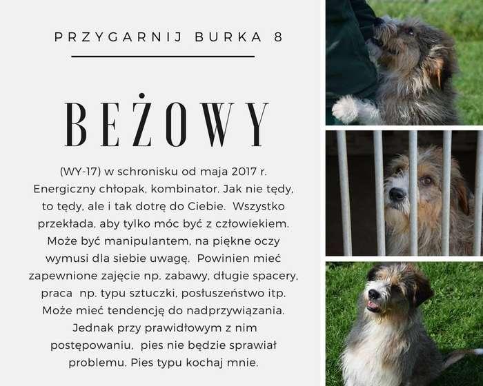 festyn_dla_czworonogow10