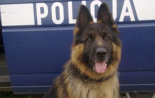 Policjanci_z_psem_odnalezli