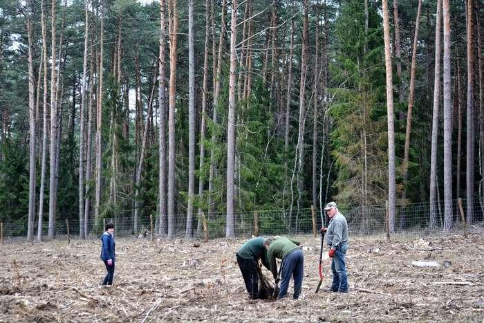 27_milionow_drzew1_01