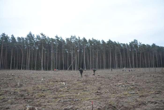 27_milionow_drzew1_02