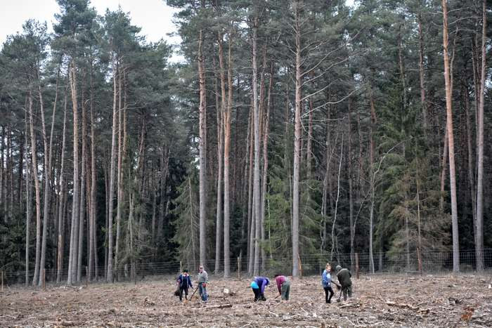 27_milionow_drzew1_03