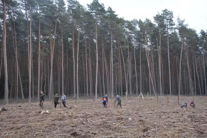 27_milionow_drzew1_04