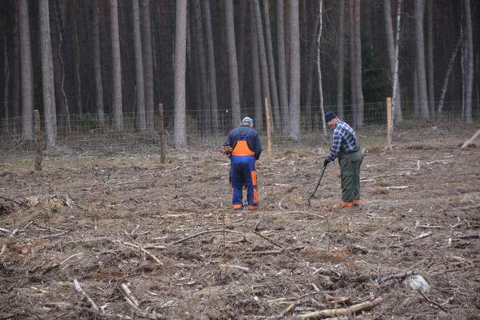 27_milionow_drzew1_05