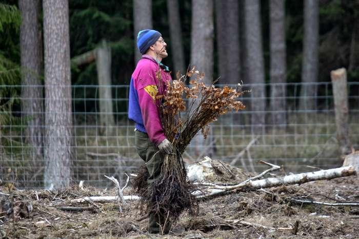 27_milionow_drzew1_08