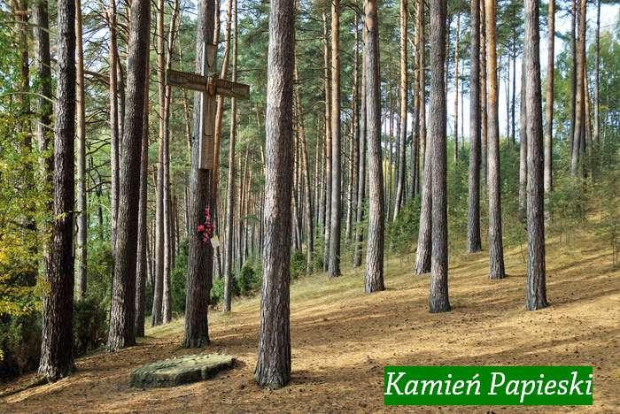 jak_wypoczywac_w_lesie1_06