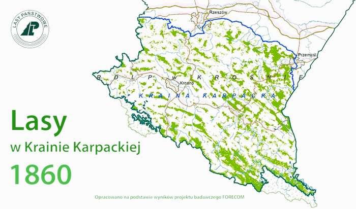 lasy_karpackie1_01