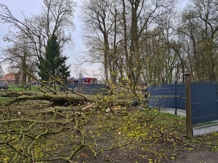 drzewo_przewrocilo1_03